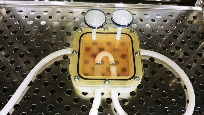 Una cámara de biorreactor impresa en 3D con una aorta en miniatura creciendo en su interior, generada mediante ingeniería de tejidos. El tejido se cultiva en el biorreactor para obtener el funcionamiento mecánico y biológico del tejido orgánico.