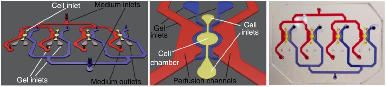 Il dispositivo per cultura di cellule microfluidiche basato su polidimetilsilossano (PDMS) sviluppato dagli scienziati del EPFL. (fonte)