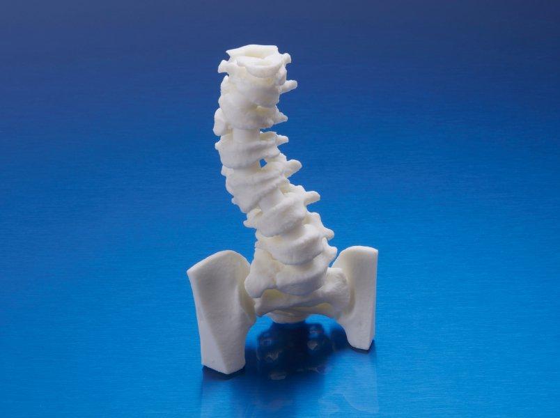 Pediatric ribcage
